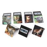 Bookmark Magnets_Night Safari 2